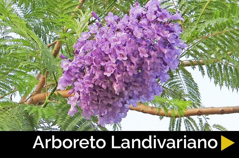 Arboreto Landivariano